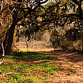 Texas Countryside and Hill Country Collection