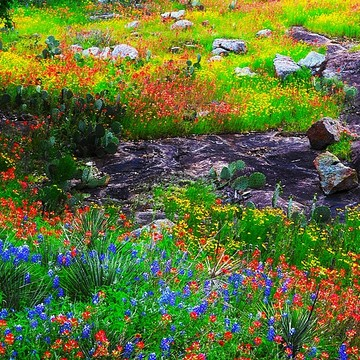 Texas Hill Country Collection