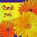 Thank You Cards Collection