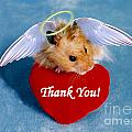 Thank You Greeting Cards Collection