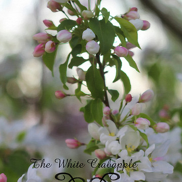 The Crabapple Collection