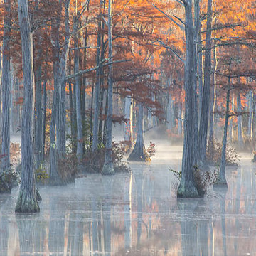 The Cypress Pond Collection