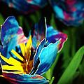 The DuckTape Florist  Collection
