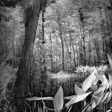 The Everglades - Photography Collection