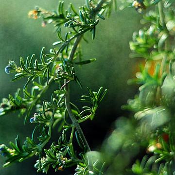 The Herb Garden Collection
