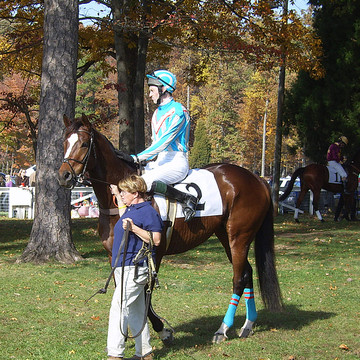 The Montpelier Hunt Races Collection