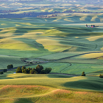 The Palouse-Washington State Collection