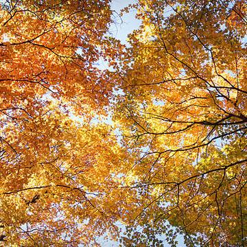 The Seasons -- Autumn Collection