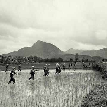 The Vietnam War Collection