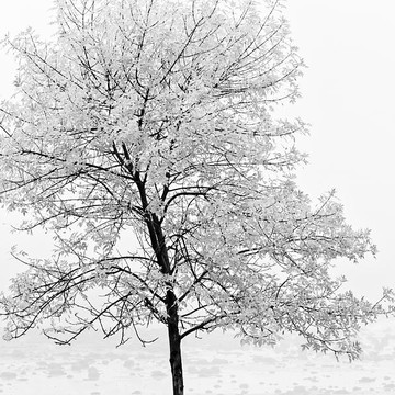 Tree Square Black and White Collection
