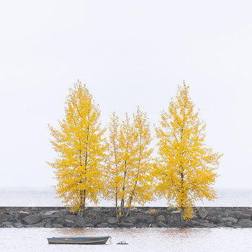 Tree Square Collection