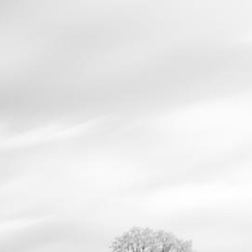 Tree Triptych Black and White  Collection