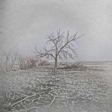 Trees of the West Art Collection