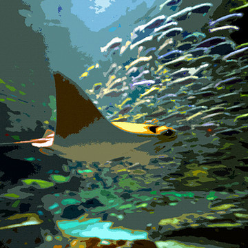 Tropical marine life art Collection