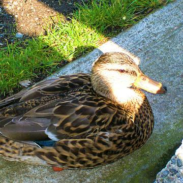 Tsawassen Point Roberts Centennial Park Birds Collection