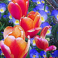 Tulip Bliss Collection