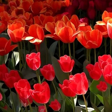 Tulip Blooms Collection