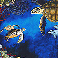 Turtles Collection