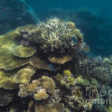 Underwater Collection