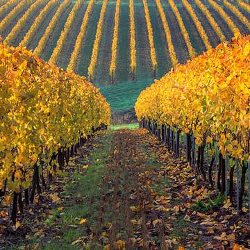 Vineyards Northwest USA Collection