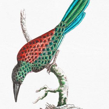 Vintage Biology Illustrations Collection