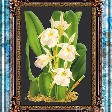 Vintage Orchid Antique Design Marble Part 2