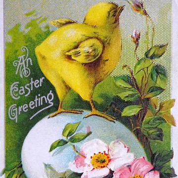 Vintage Postcards Collection