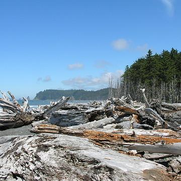 Washington State Pacific Rim Collection
