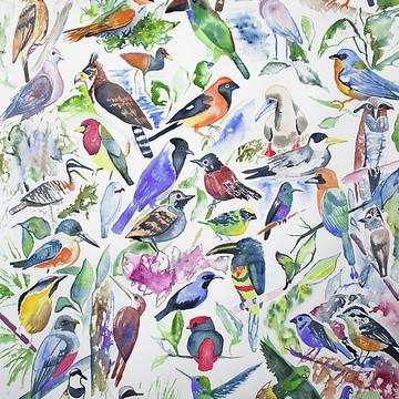Watercolors - Birds of Ecuador Collection