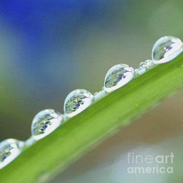 Waterdrops Collection