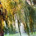 Weeping Willow Trees Collection