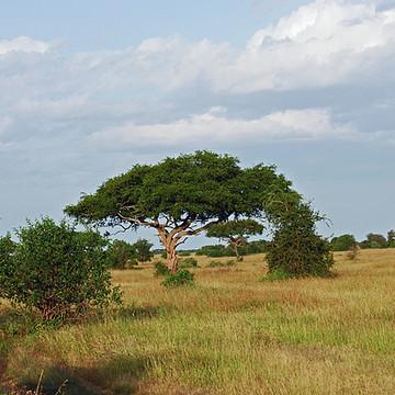 Western Sector - Tanzania