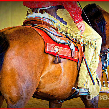 Western Themes and Arabians Collection