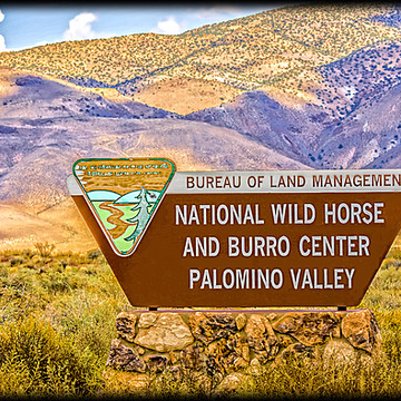 Wild Horses Collection