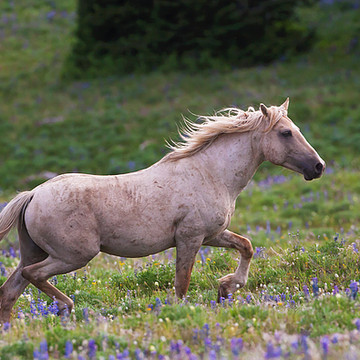 Wild Horses of the American West Collection