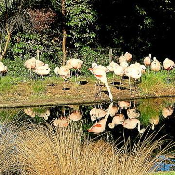 Wild life animals birds and more