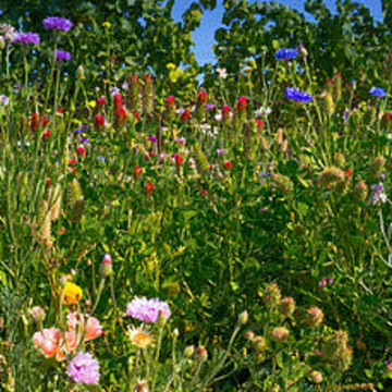 Wildflowers Collection