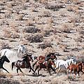Wildhorses Collection