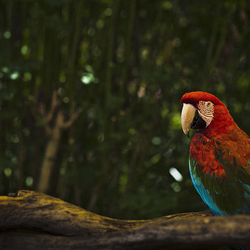 Wildlife - Photography Collection