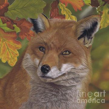 Wildlife Art Collection