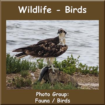 Wildlife - Birds Collection