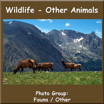 Wildlife - General Collection