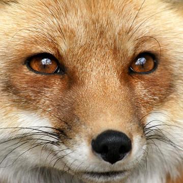 Wildlife Mammals Collection