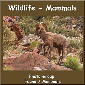 Wildlife - Mammals Collection
