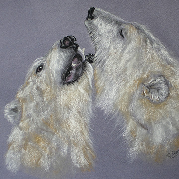 Wildlife  Collection
