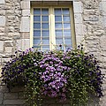 Window Boxes Collection