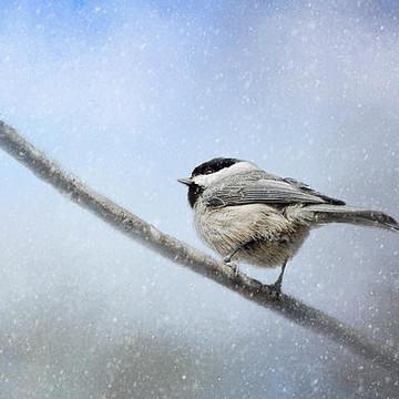 Winter Bird Collection Collection