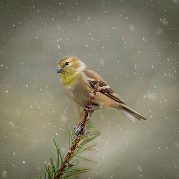 Winter Birds Collection
