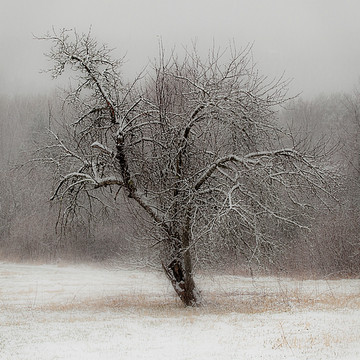 Winter Images Collection