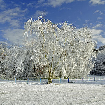Winter Scenes Collection